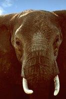 Serengeti, Tanzania, Africa
