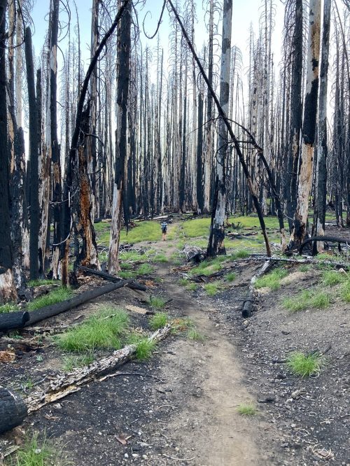 Picture of Katrina hiking though burned-out forest in Crater Lake National Park.