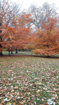 autumn leaves in St James Park