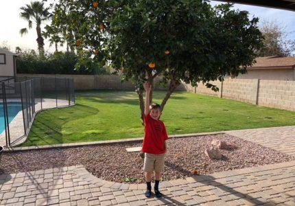 Billy Horton Blog- Are you bearing good fruit?