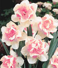 Fall Planting Bulbs on Sale at Burpee