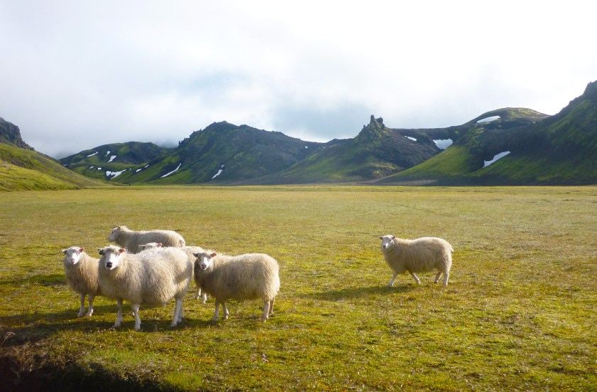 From Álftavatn to Emstrur - 16 km.