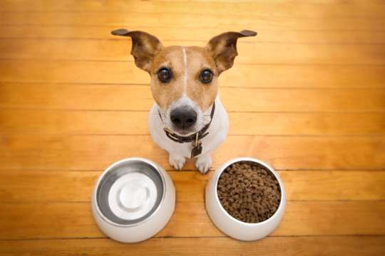 Dog with his bowls!