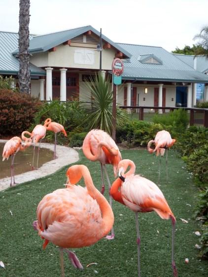 SeaWorld San Diego - Pretty Flamingo