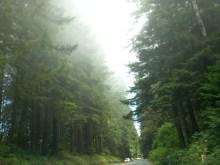 California - Redwoods