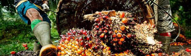 palmoilplantationworkers_284108_413161