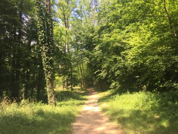 Sentiero di strada bianca nel parco del Curone