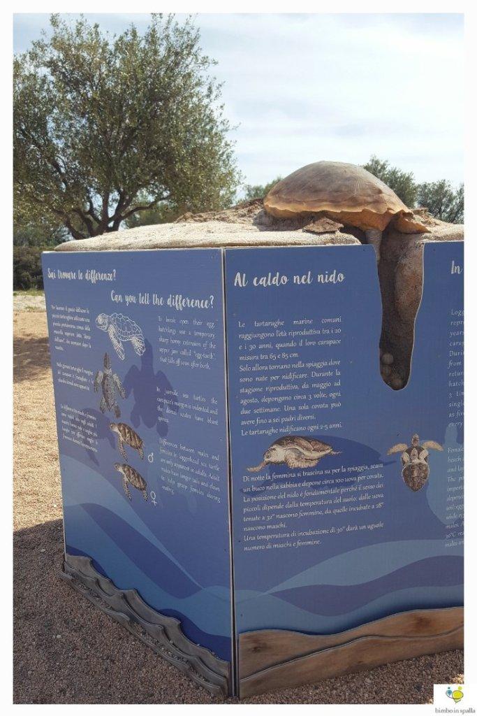 ll Tartamondo dell'Acquario di Cala Gonone in Sardegna