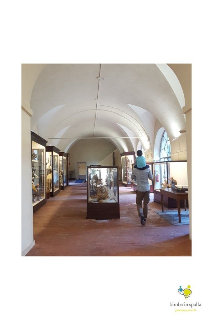 Museo di Calci Toscana