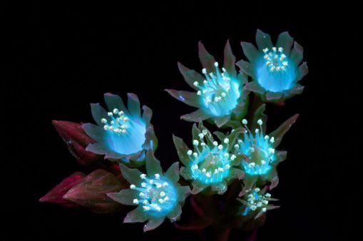 Succulent-Cluster-2s-58e951936dc68__880