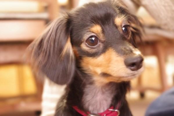 犬がなつかない5つの原因と3つの対処法