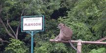 objek-wisata-cirebon-plangon