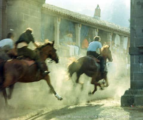 l'ardia horses