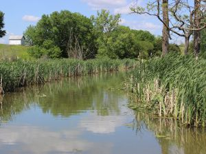 The watershed is preserved on part of the property.