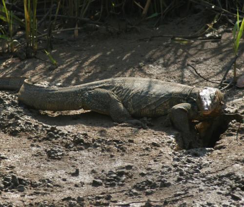 Odishan Wildlife, Bhitarkanita