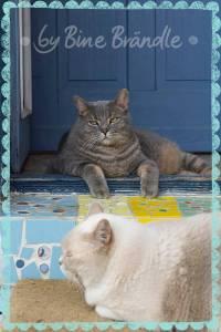 Katzen - Katzen