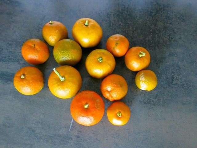 Orangenmarmelade – 01