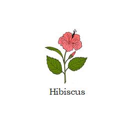 herb hibiscus