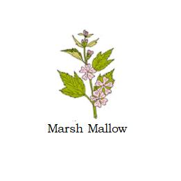herb marsh mallow