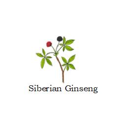 herb siberian ginseng