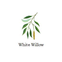 herb white willow