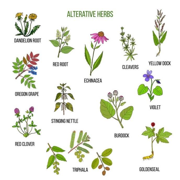 Alterative herbs. Hand drawn vector set of medicinal plants