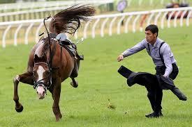 Horse - Jockey