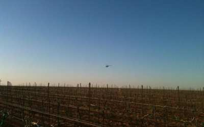 Other Ways to Avoid a Late Spring Freeze in a Vineyard
