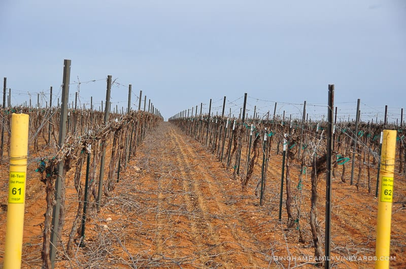 The vineyards in early spring