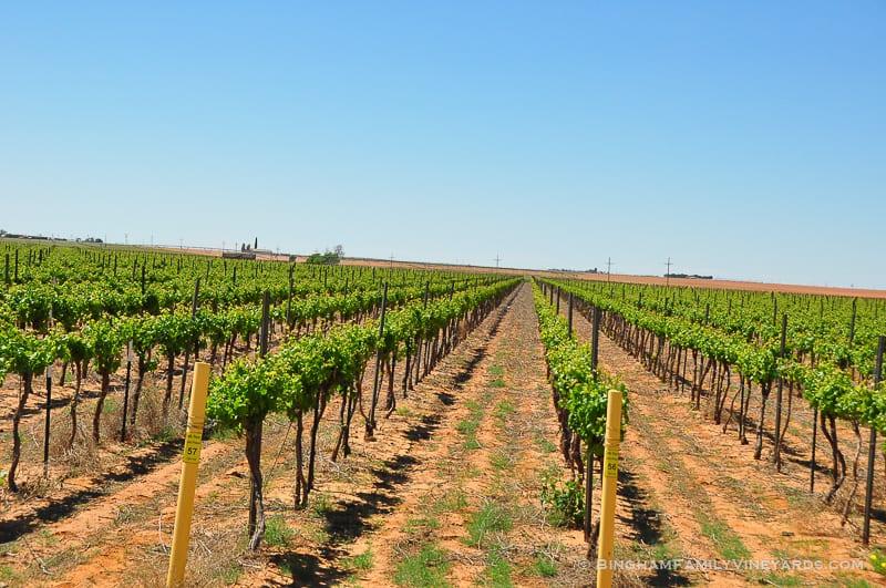 15.04.30_vineyards_054-web