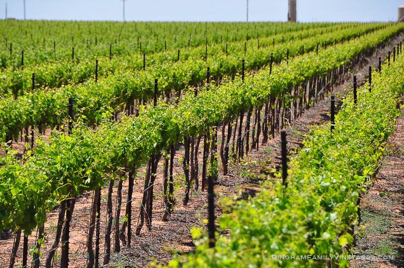 15.04.30_vineyards_072-web