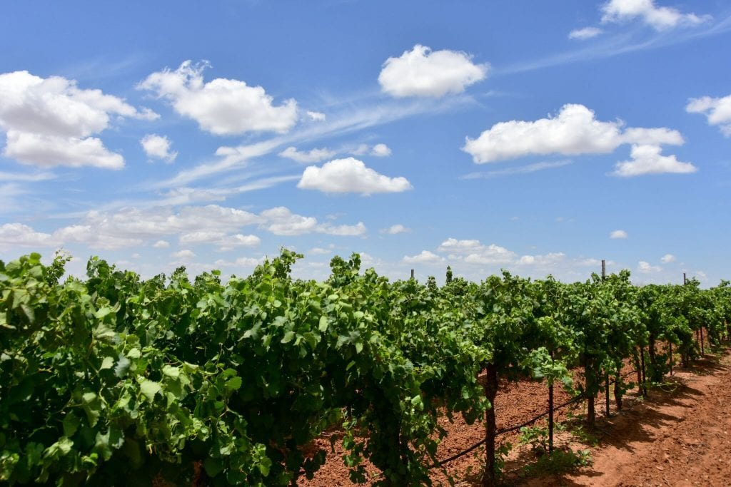 texas wineries get smart tourism and tex med wines prime women