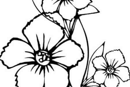 Gambar Gambar Sketsa Bunga Mawar Melati Bingkaigambar Jpeg Png Gif