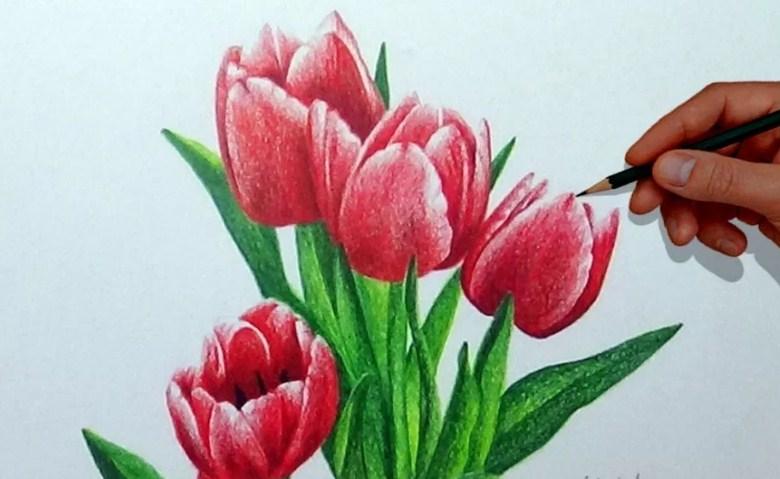 Sketsa Gambar Bunga Tulip Mekar Koleksi Gambar Bunga