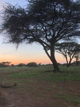 Amboseli (3)
