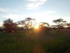 Sonnenuntergang im Serengeti
