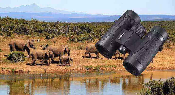 Best Binoculars for Safari