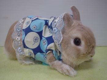bisnis pakaian hewan kelinci