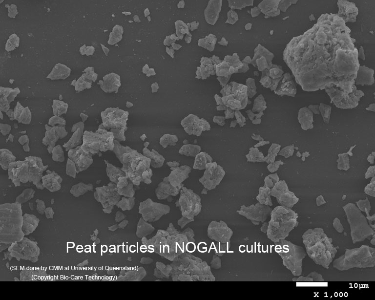 Peat particles in NOGALL cultures