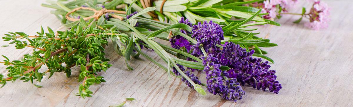 ingredientes-naturales-hierbas-shutterstock_286052078