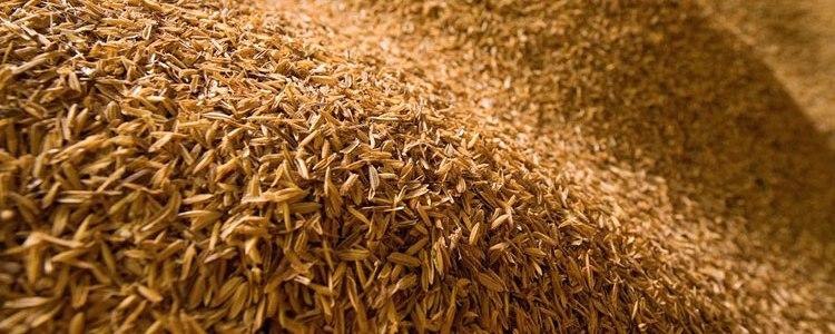 Sílica a partir da casca do arroz