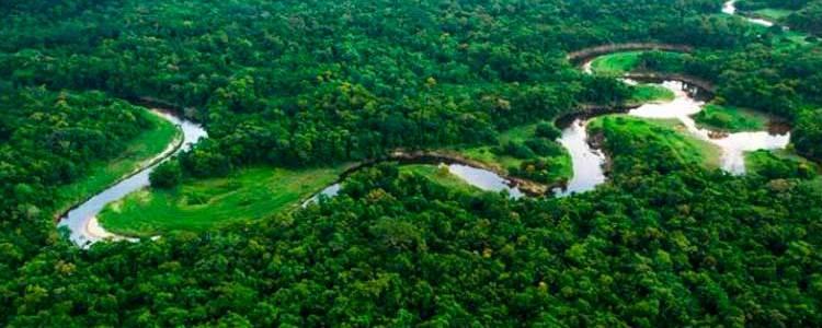 créditos florestais redd+