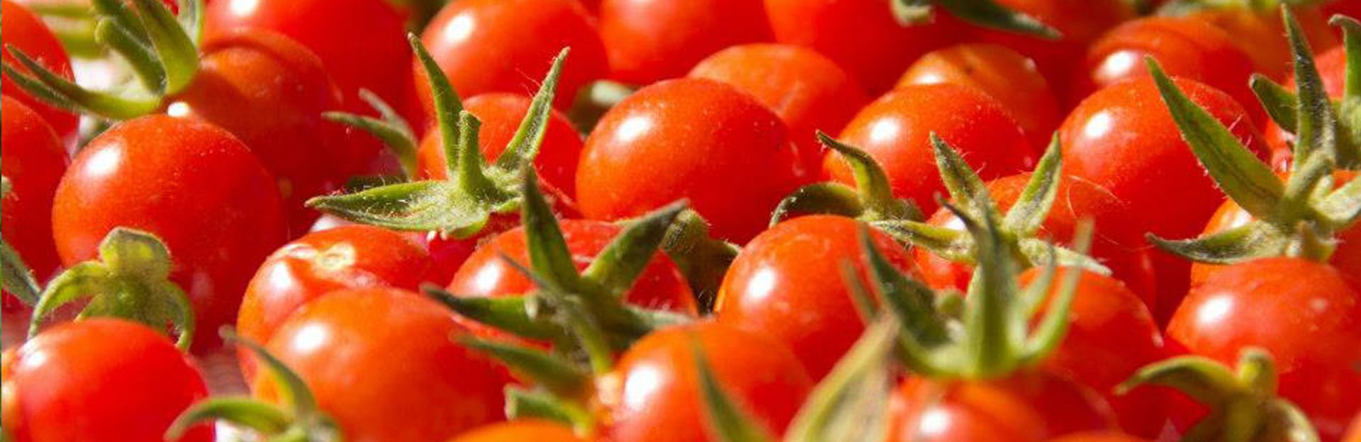Bioalgarrobo Frutas y hortalizas ecológicas de Málaga