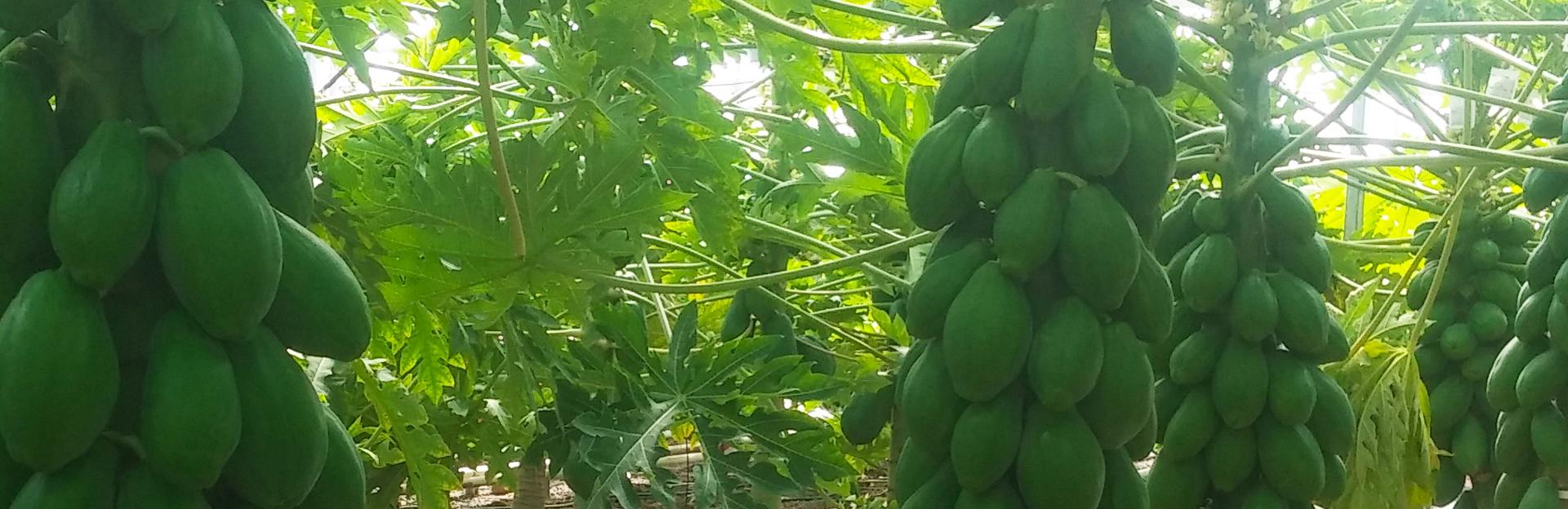 Bio Algarrobo Frutas y hortalizas ecológicas de Málaga