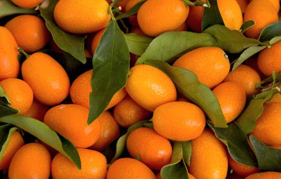 Bioalgarrobo kumquat ecológico