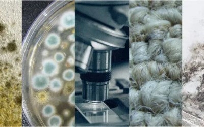 Mold Testing Methods Compared