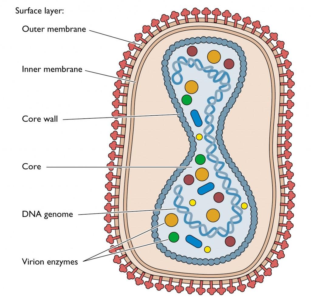 Virus Becca S Bio Blog