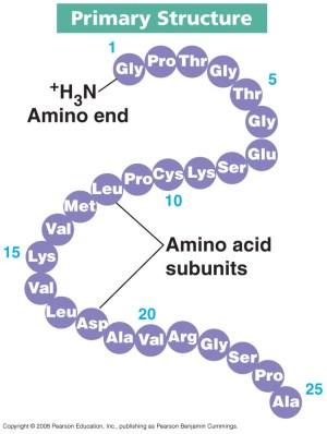 Proteins | biochemanics