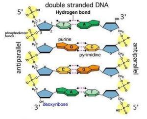 biochemoshpit | Reflecting on Biochemistry