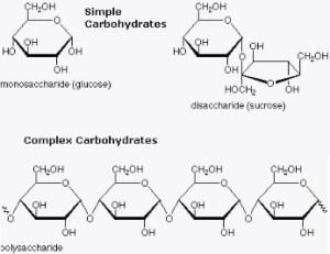 carbs   biochemshariestar